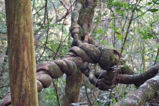 KwaZulu-Natal, Sudafrica: Naturaleza caprichosa