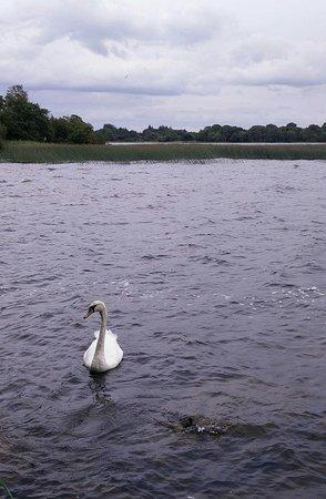 Mountshannon, Ireland: lakeside view