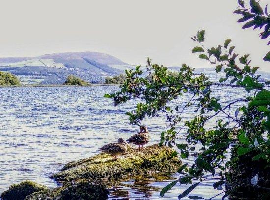 Mountshannon, Ireland: lakeside view.