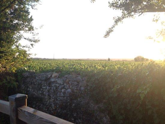 Saint-Seurin-de-Cadourne 사진