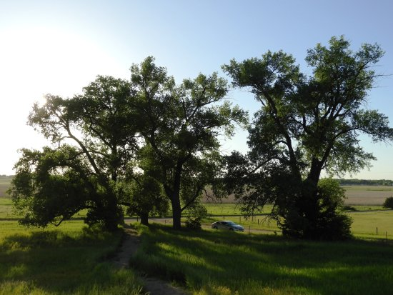 De Smet, SD: Pa's cottonwood trees (I couldn't fit them all in the picture.)
