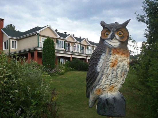 Saint-Alexis-des-Monts, Canadá: Est-ce la mascotte de Trip Advisor qui monte la garde devant l'un des deux pavillons ?