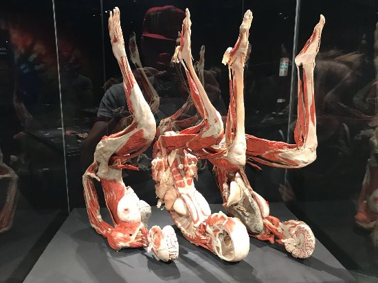 Body Worlds: photo0.jpg