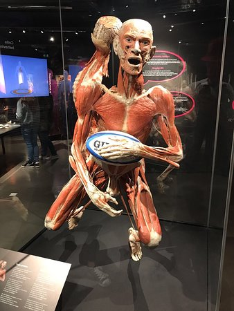 Body Worlds: photo1.jpg