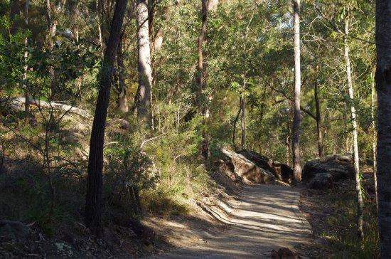 Springwood, Australia: Along the track