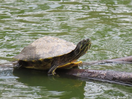 Durham, Caroline du Nord : stop by and see the ducks and turtles too