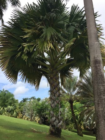 Le Francois, Martinik: photo2.jpg