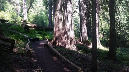 Idaho: DeVoto Memorial Cedar Grove has a short walking trail