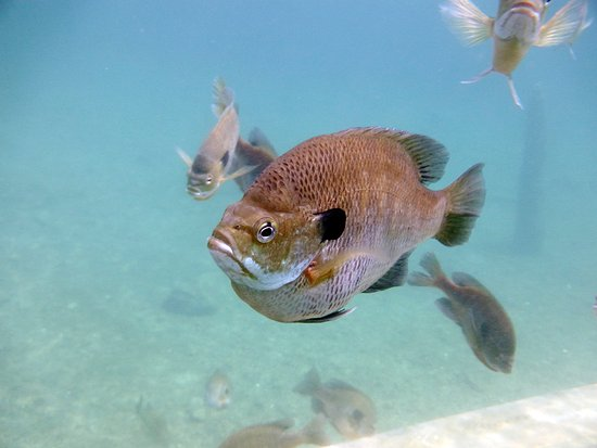 Rawlings, Βιρτζίνια: Friendly fish greet you while you swim around!