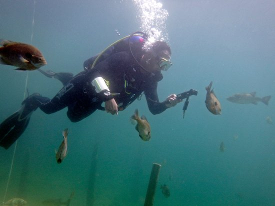 Rawlings, Βιρτζίνια: One diver and his following!