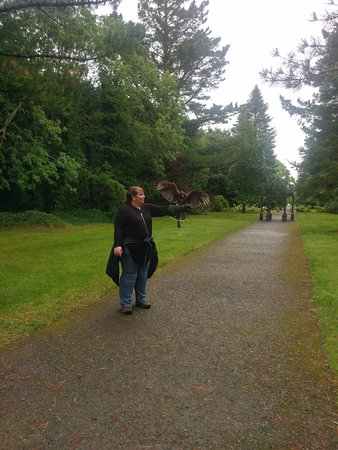 Cong, Irlanda: Flying a Harris Hawk in the grounds of Ashford Castle.