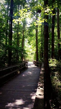 Greensboro, Carolina del Norte: Nice boardwalk