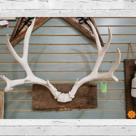 Staunton, VA: Painted white antlers mounted on barnwood.  Great addition to your rustic decor! $79.99 #cherish