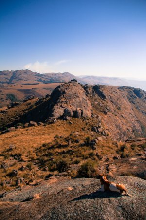 Ezulwini, Swasiland: The top of the Lodge's own hiking trail, along with the Lodge's dog!