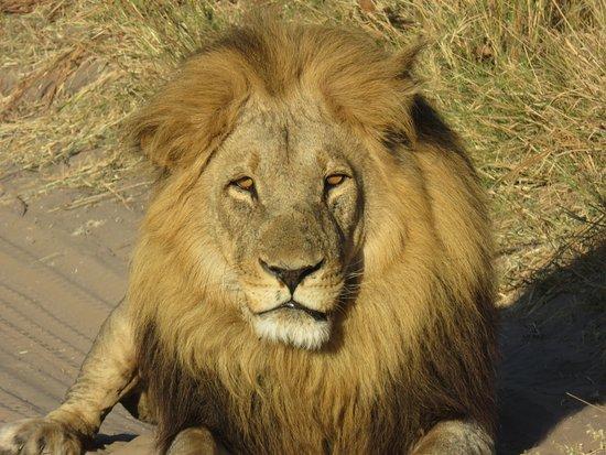 Chobe National Park, Botsvana: How great is this?