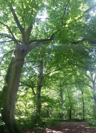 Corby, UK: sunlight through the trees