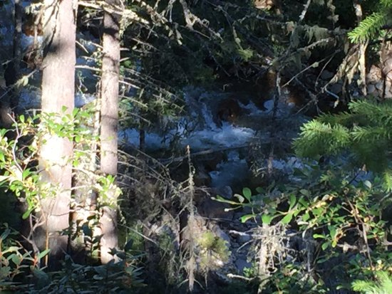 Valemount, Kanada: Swift Creek tumbles through the bush