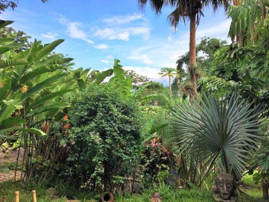 Pura Vida Hotel: garden