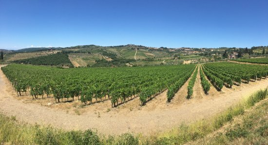 Scenic wine tours in Tuscany : Breathtaking views!