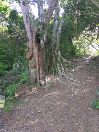 North Miami Beach, فلوريدا: Playground, trail areas