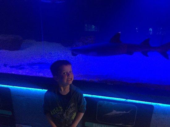 Seaport Aquarium: photo0.jpg
