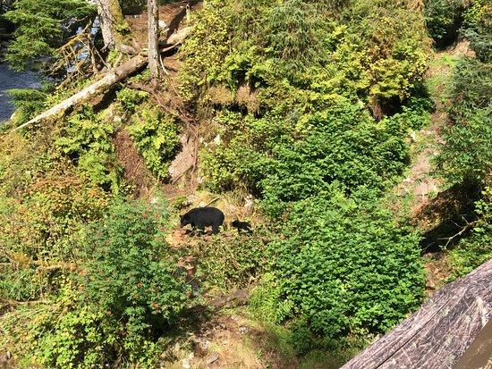 Wrangell, AK: Anan bear and cub