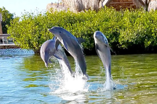 Dolphin Research Center und Florida ...