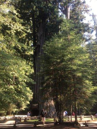 Leggett, Californië: photo1.jpg