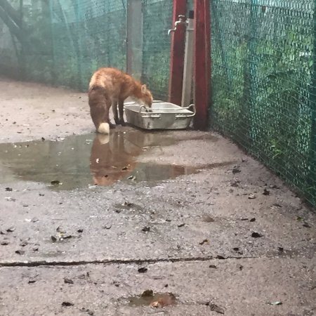 Shiroishi, Japan: Getting a drink in the big enclosure