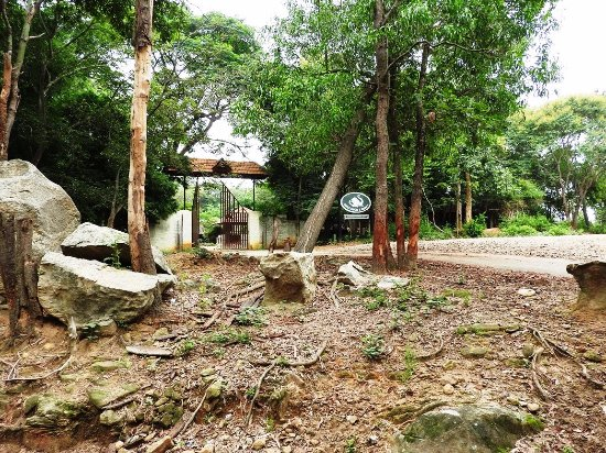 Bhoothanahalli, India: Resort entrance from forest