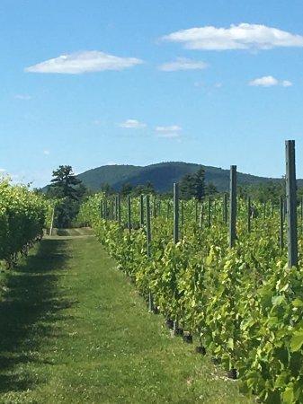 Lincolnville, Maine: Cellardoor vinyards.