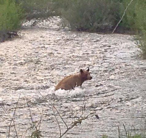 Hagensborg, Canadá: River bear
