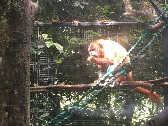 Bouillante, Guadalupe: Parc animalier