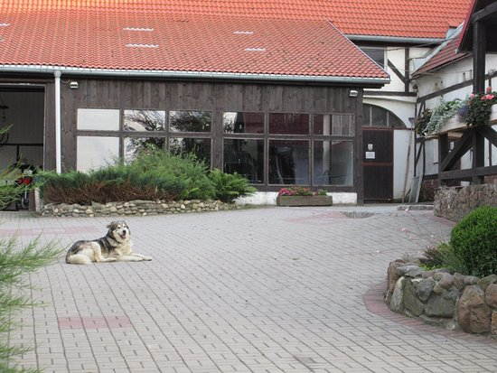 Nowa Ruda, Polska: friendly dog Borys in the yard