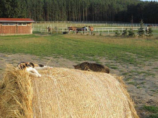 Nowa Ruda, Polska: lazy cats