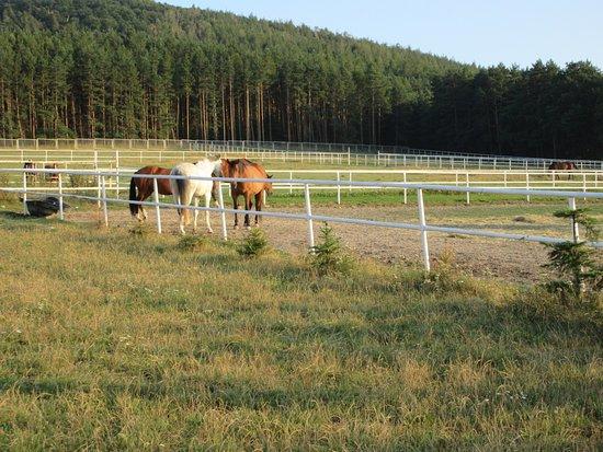 Nowa Ruda, Polska: horses - 3