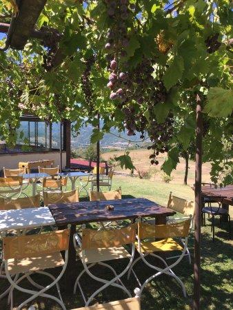 Pennabilli, Italy: All'ombra degli alberi da frutta