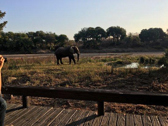 Timbavati Private Nature Reserve, Sudáfrica: photo3.jpg