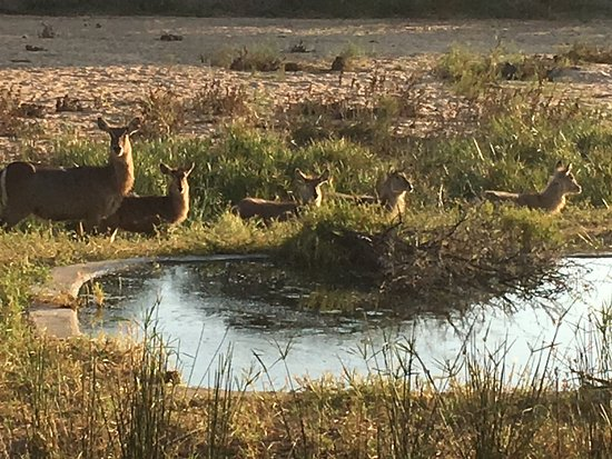 Timbavati Private Nature Reserve, Sudáfrica: photo5.jpg