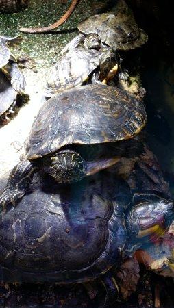 Büsum, Alemania: Schildkröten im Terrarium