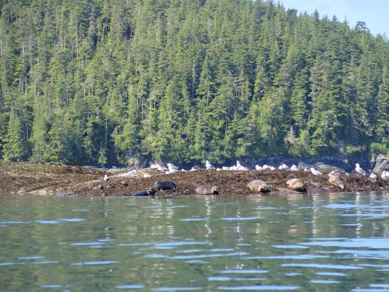 Telegraph Cove, Kanada: seals and sea lions