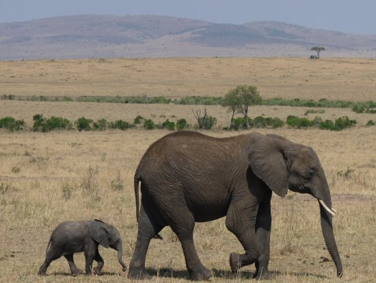 Olderkesi Private Reserve, Kenia: View of Masai Mara with elephants!