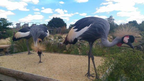 Zoo La Boissière du Doré: P_20170816_151809_large.jpg