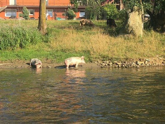 Piwniczna, โปแลนด์: Ciekawa fauna i flora brzegów Popradu