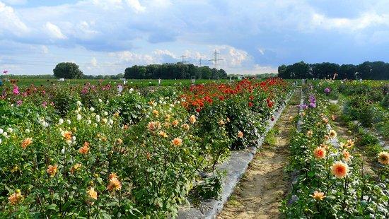Jouy en Josas, Francja: Champs de fleurs...