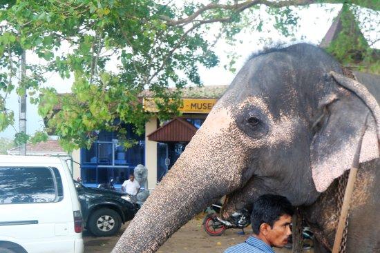 Bentota, Sri Lanka: Tempel Aluthgama
