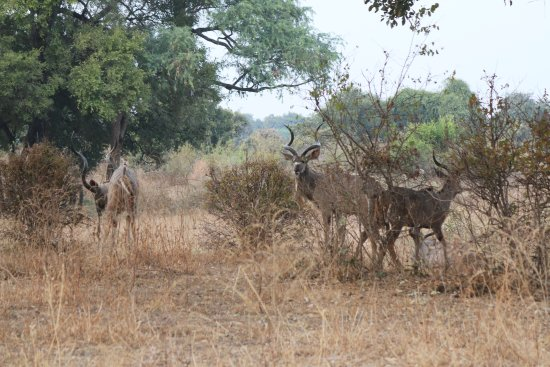 South Luangwa National Park Image