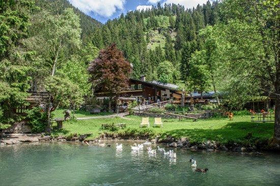 Silbertal, Austria: wunderschöner Teich mit Enten und Gänsen
