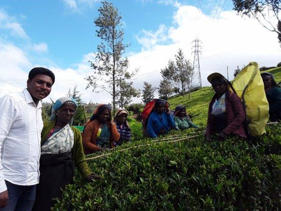Tangalle, Sri Lanka: Pedro tea plantation nuwra elly SRILANK