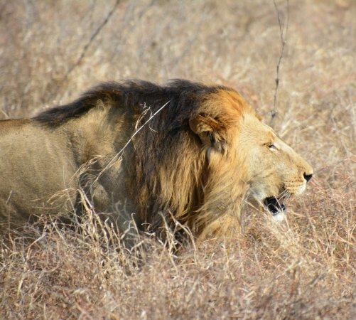 Kruger National Park, South Africa: Nhongo Safaris
